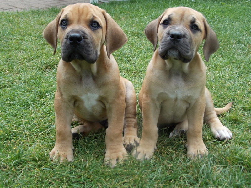 Can Puppies Play With Vaccinated Dogs